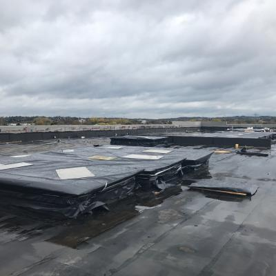 Roof And Rooflights Protected From Elements